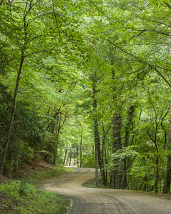 Small Curvy Country Road Under a Canopy of Trees