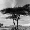 Tanzania'13-2159