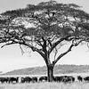 Tanzania'13-1813