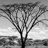 Tanzania'13-1883