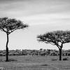 Tanzania'13-1543