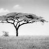 Tanzania'13-1890