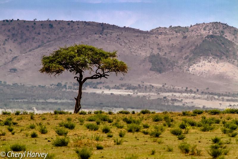 Tanzania'13-575