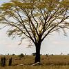 Tanzania'13-2073