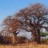 Tanzania'13-2832