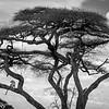 Tanzania'13-2128