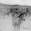 Tanzania'13-1844