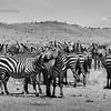 Tanzania'13-1865