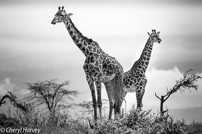 Wildlife in Black & White