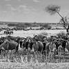 Tanzania'13-2295