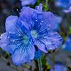Purple flowers from Woolsy burn area.