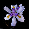 Flower with dark background.