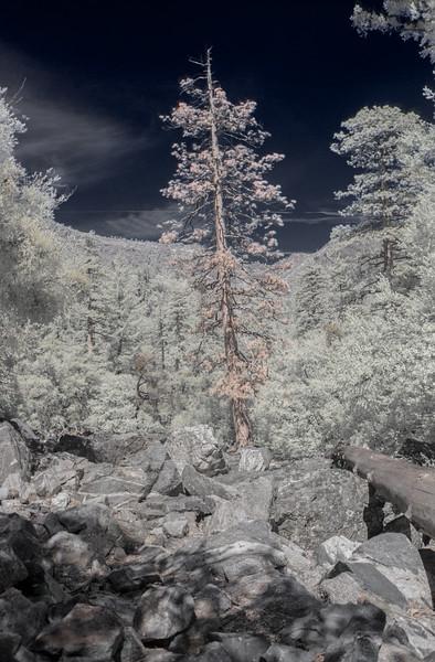Dead Tree(IR)