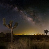 Milky Way panorama, 4 panels for the foreground and background with light painting on the foreground Joshua Tree.  I'm unsure where the light dome in the center of the photo is originating, maybe Mexicali or the eastern Coachella desert communities.