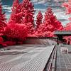 Japanese Garden, The Huntington