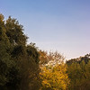 A little of the fall color and the Moon.  Most of the fall color was courtesy of the sycamore trees(and a bit by poison oak), the white alder close to the stream do lose their foliage but the leaves don't turn color.