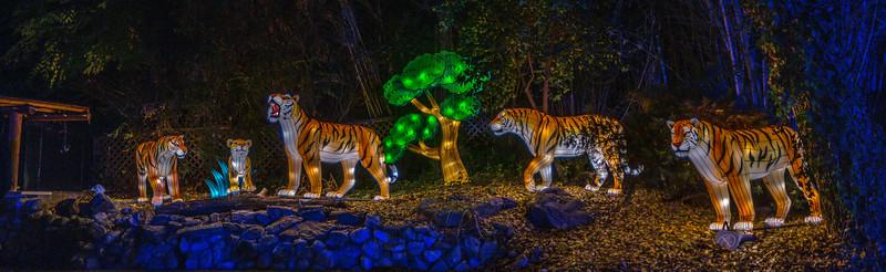 Tiger panorama.