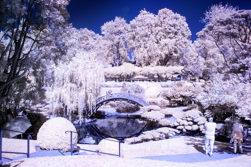 Japanese Garden @ The Huntington in IR