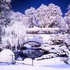 Japanese Garden @ The Huntington in IR
