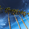 La Jolla Palms.