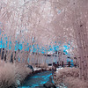Bamboo walkway in Infrared.