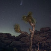 NEOWISE and a Joshua Tree