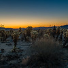 I wandered around the cactus looking for the good location as the sun began to color the eastern horizon.