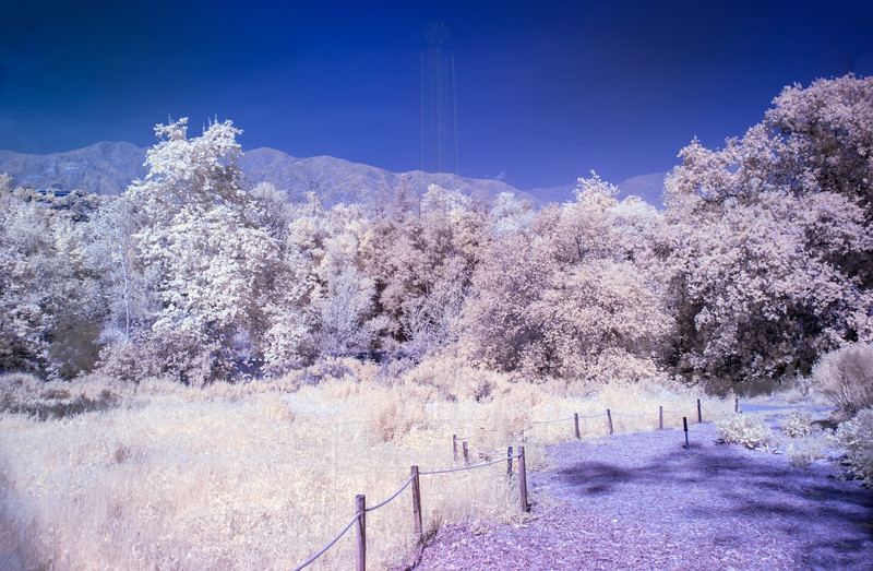 The upper reaches of the garden(in Infrared).