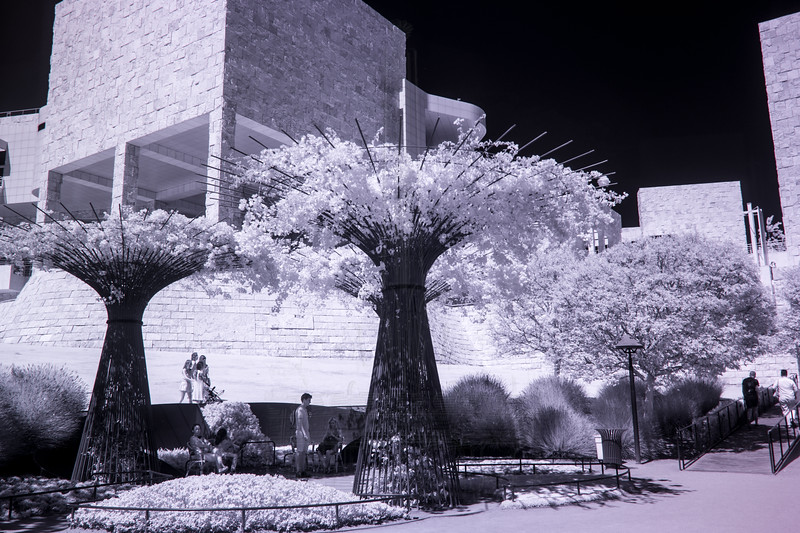 "Bougainvillea ""trees""(infrared)."