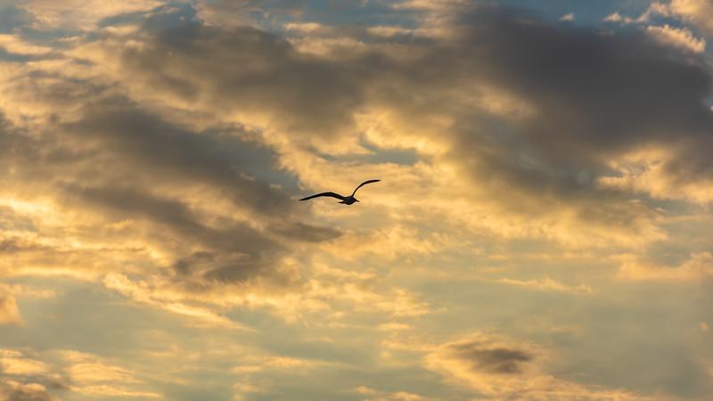 Bird Flying High ~ Eastern Seaboard