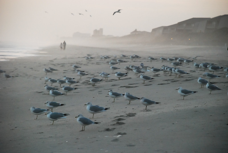 Evening on the Beach ~ Southern Outer Banks