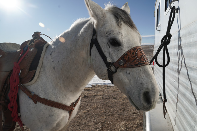 Maurice Wade spent years training his American-quarter horse named Beer Money. Emily Maxwell | I Am Denver