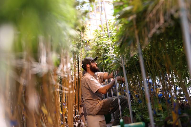 Weed Revolution -- Denver