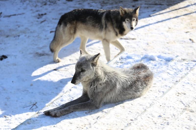 Wolf Creek Habitat & Sanctuary Wolf Creek Habitat & Sanctuary
