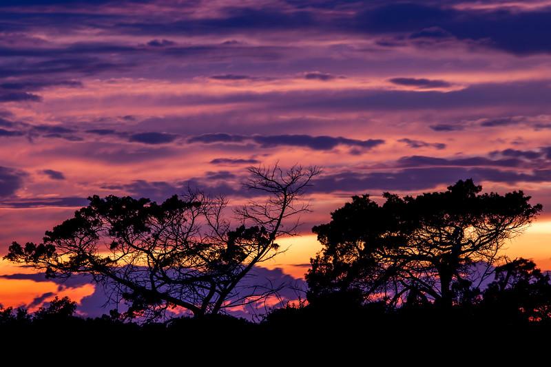 Painted Twilight