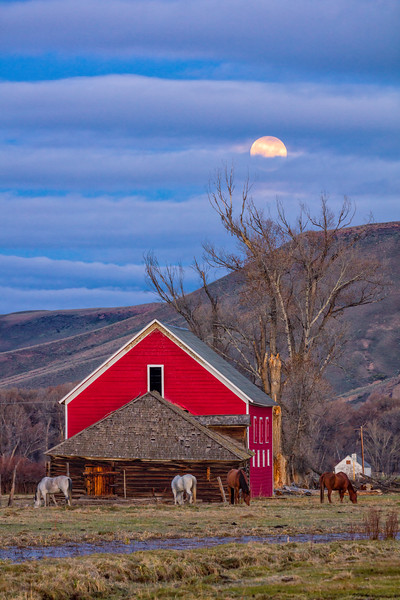 """The Full Flower Moon Setting on the Spann Ranch"" Gunnison, Colorado"