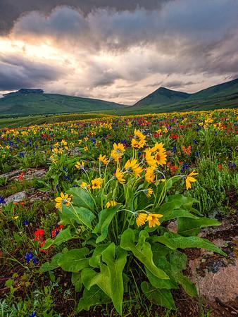 """""""Nature's Bouquet"""""""