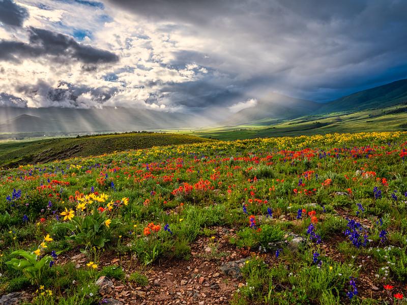 """""""Mountain Garden"""""""
