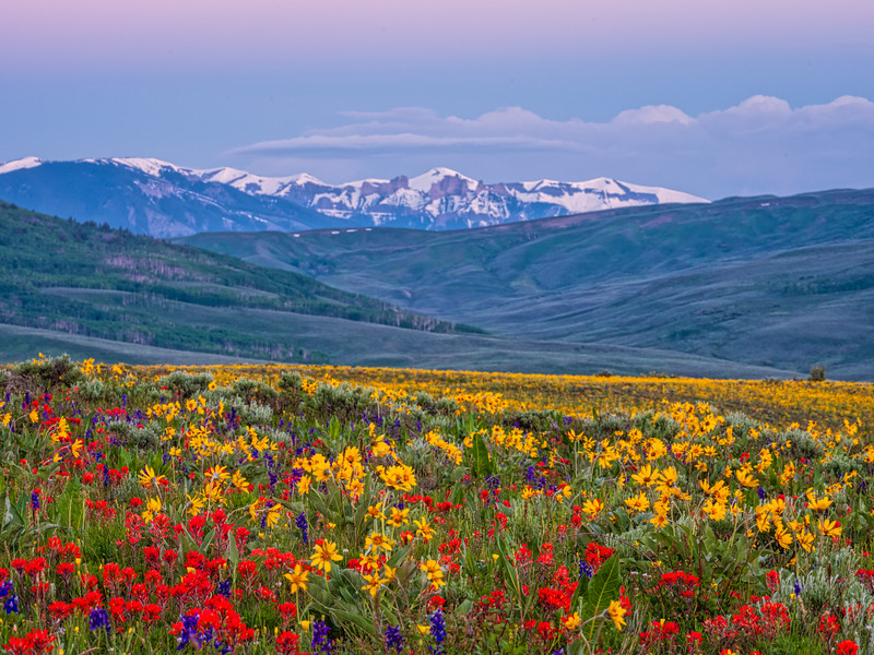 """Castle and it's garden of wildflowers"" Colorado"