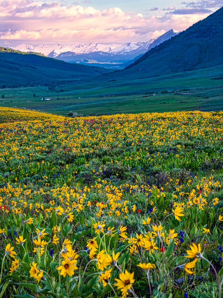 """""""Valley full of flowers"""", Colorado"""