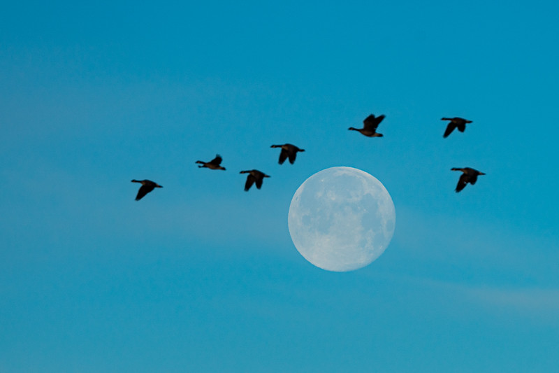 """Moon and Geese"", Monte Vista, Colorado"