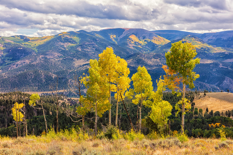 """Fall Colors"" Colorado"