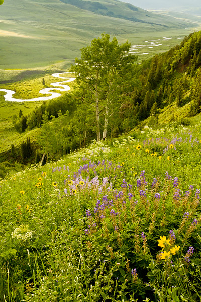 """East River & Flowers"" Gothic, Colorado"