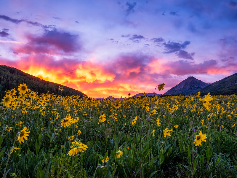 """Sky and flowers"", Crested Butte, Colorado"