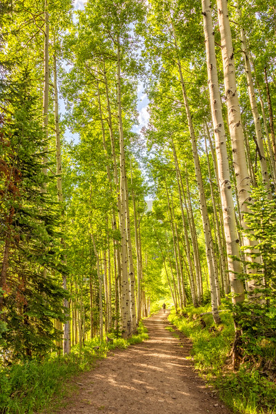 """Biking through the Trees"" Crested Butte, Colorado"