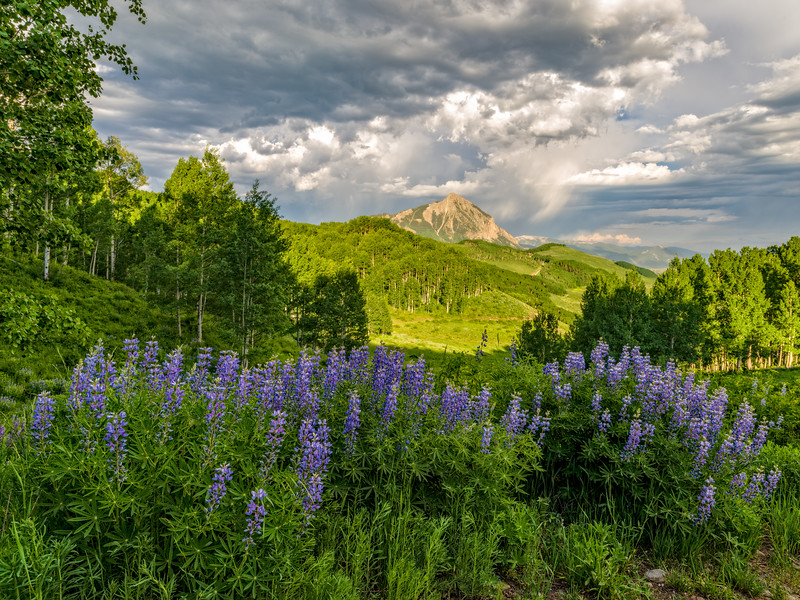 """Lupines and Mount Crested Butte"" Crested Butte, Colorado"