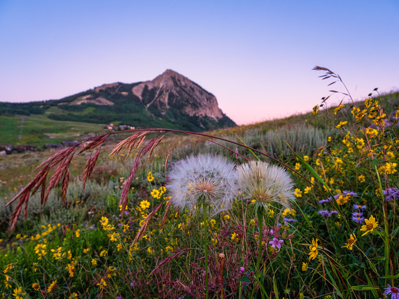 """Wildflowers and grasses"", Crested Butte, Colorado"