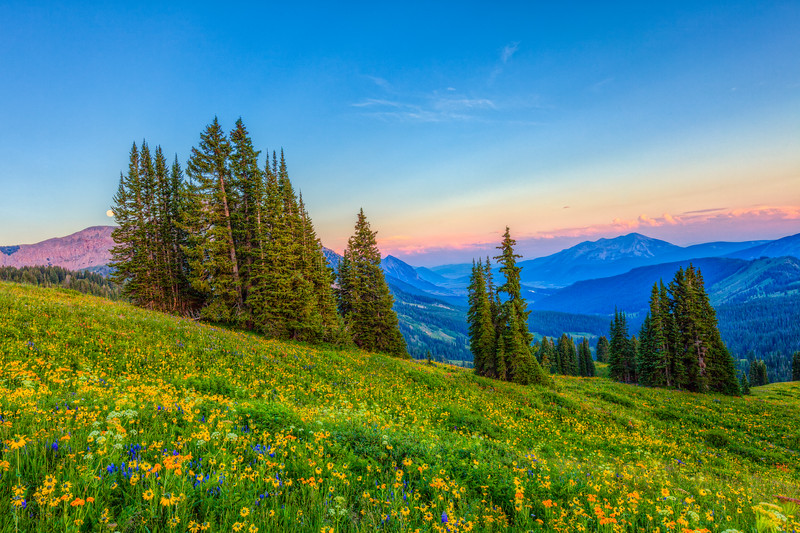 """Wild Flowers Washington Gultch"" Crested Butte, Colorado"