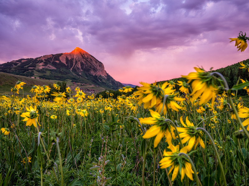"""Mt. Crested Butte, and Wildflowers """