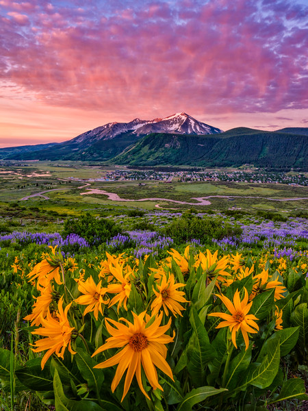 """Sunflower Sunrise"" Lupine Trail, Crested Butte Colorado"